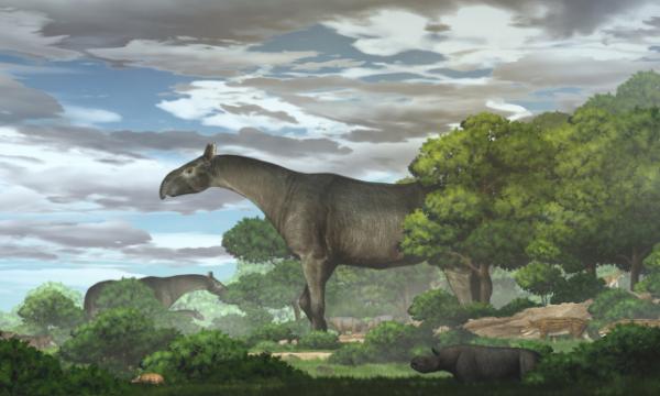 甘肃临夏发现巨犀化石:有4头大象那么重,曾迁徙穿越青藏高原